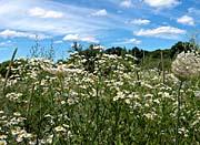 Brandie Newmon Field Of Wildflowers Easthampton Massachusetts canvas prints