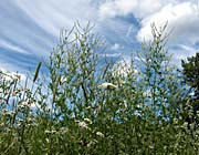 Brandie Newmon Wild Flower Field in Easthampton, Massachusetts