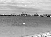 Brandie Newmon Provincetown Harbor, Massachusetts (Black and White)