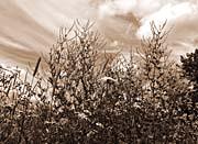 Brandie Newmon Wild Flower Field (Sepia Tone)
