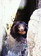 Brandie Newmon Sun Bear Cooling Off