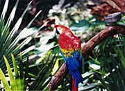Brandie Newmon Macaw Profile canvas prints