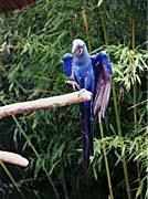 Brandie Newmon Blue Parrots - Dance With Me