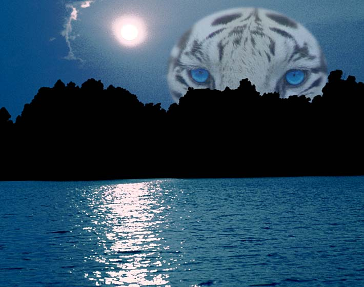 Brandie Newmon Eye of the Tiger stretched canvas art print