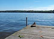 Brandie Newmon Duck by the Lake