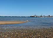 Brandie Newmon Provincetown Harbor
