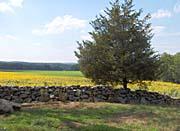 Brandie Newmon Field with Sunflowers