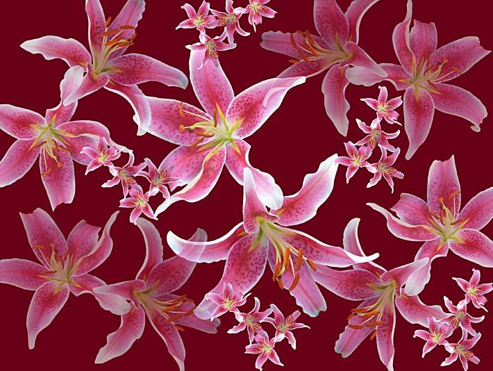Brandie Newmon Lilies stretched canvas art print
