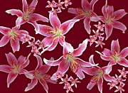 Brandie Newmon Lilies canvas prints