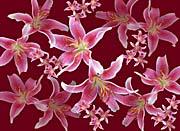 Brandie Newmon Lilies