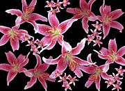Brandie Newmon Lily canvas prints