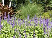 Brandie Newmon Pampas Grass Flower Garden