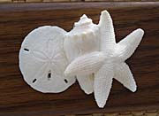 Kim O'Leary Photography Beach Ivory Starfish and Seashells