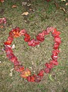 Kim O'Leary Photography Heart of Leaves