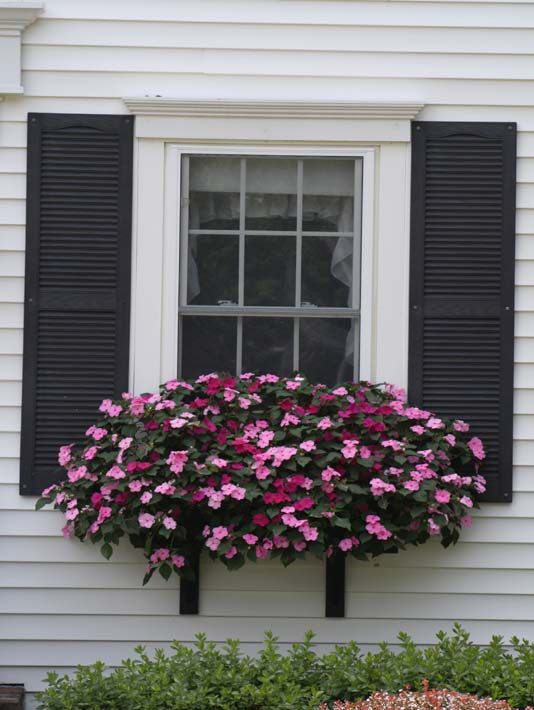 Kim O'Leary Photography Summer Window Flowers stretched canvas art print