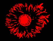 Lora Ashley Black and Red Flower Abstract