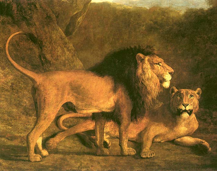 Jacques Laurent Agasse Two Lions, Life Size stretched canvas art print