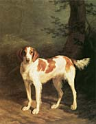 Jacques Laurent Agasse Dash, A Setter