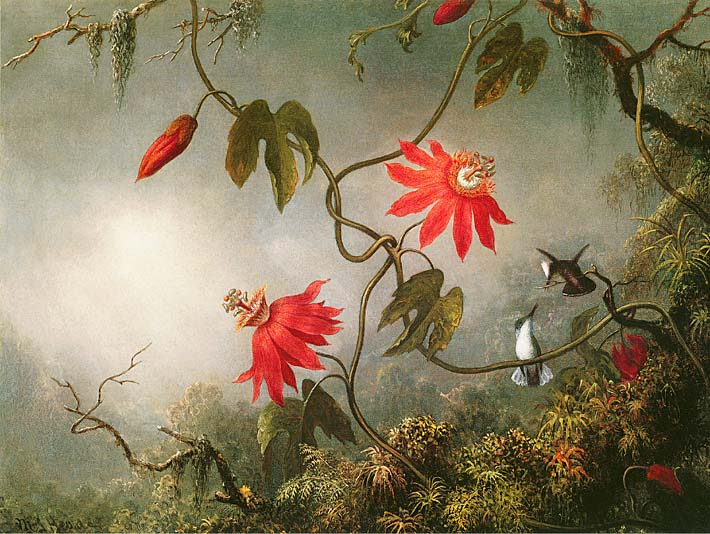 Martin Johnson Heade Passion Flowers and Hummingbirds stretched canvas art print