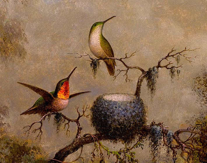Martin Johnson Heade Hummingbirds and Their Nest stretched canvas art print