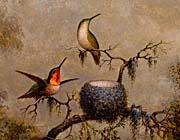 Martin Johnson Heade Hummingbirds And Their Nest canvas prints