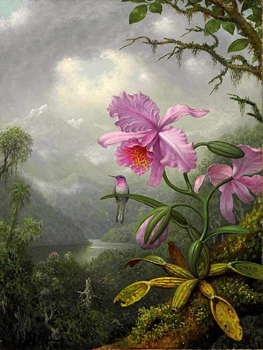 Martin Johnson Heade Hummingbird Perched on the Orchid Plant stretched canvas art print