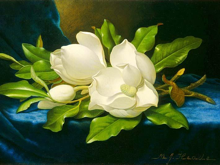 Martin Johnson Heade Magnolias on a Blue Velvet Cloth stretched canvas art print