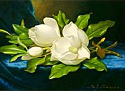 Martin Johnson Heade Magnolias On A Blue Velvet Cloth canvas prints