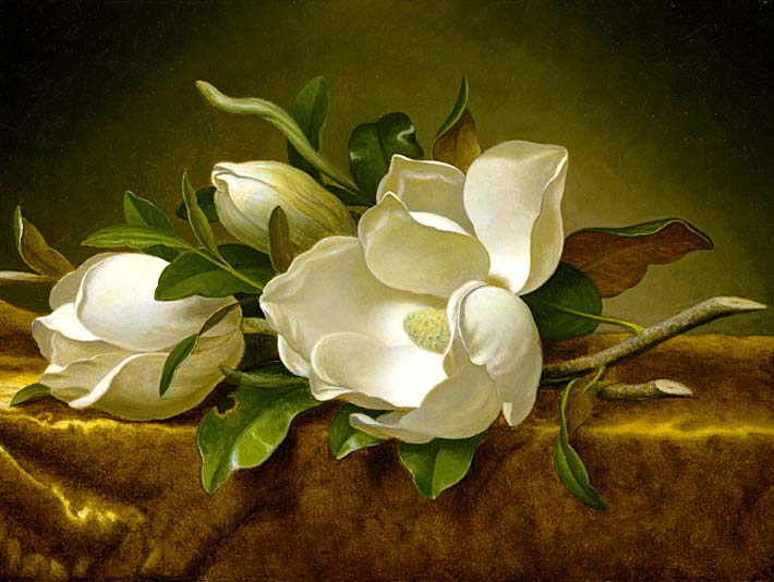 Martin Johnson Heade Magnolias on a Gold Velvet Cloth stretched canvas art print