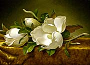 Martin Johnson Heade Magnolias On A Gold Velvet Cloth canvas prints
