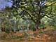 Claude Monet Prints - The Bodmer Oak, Forest of Fontainebleau