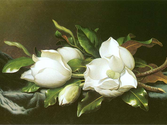 Martin Johnson Heade Magnolias (detail) stretched canvas art print