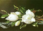 Martin Johnson Heade Magnolias (detail)