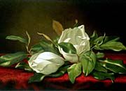 Martin Johnson Heade Giant Magnolias canvas prints