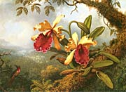 Martin Johnson Heade Orchids and Hummingbird