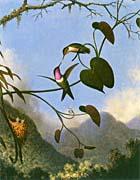 Martin Johnson Heade Amethyst Woodstar canvas prints