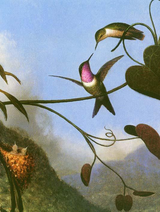 Martin Johnson Heade Amethyst Woodstar (detail) stretched canvas art print