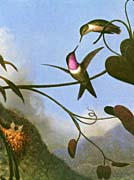 Martin Johnson Heade Amethyst Woodstar Detail canvas prints