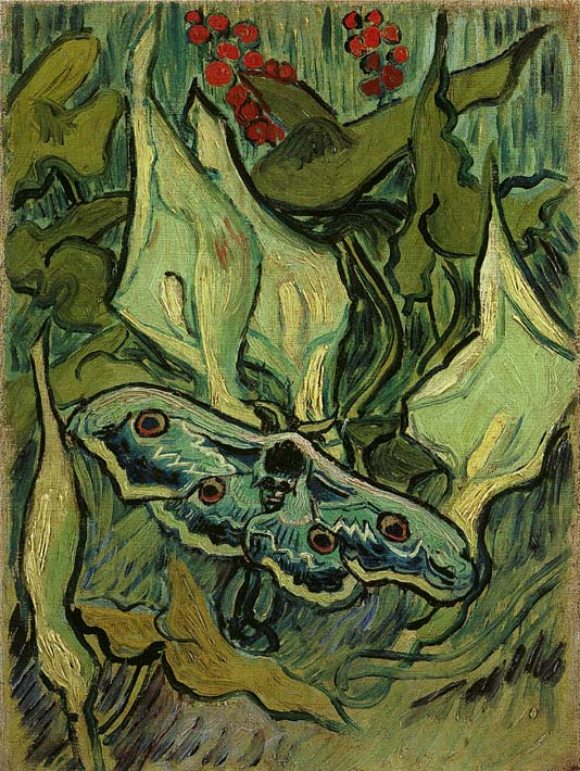 Vincent van Gogh Emperor Moth stretched canvas art print