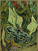 Vincent Van Gogh Emperor Moth canvas prints