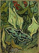Vincent Van Gogh Emperor Moth