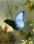 Martin Johnson Heade Blue Morpho Butterfly canvas prints