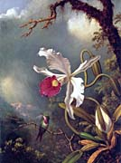 Martin Johnson Heade An Amethyst Hummingbird With A White Orchid canvas prints