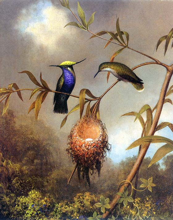 Martin Johnson Heade Black Breasted Plovercrest stretched canvas art print