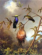 Martin Johnson Heade Black Breasted Plovercrest canvas prints