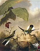 Martin Johnson Heade Black Eared Fairy canvas prints