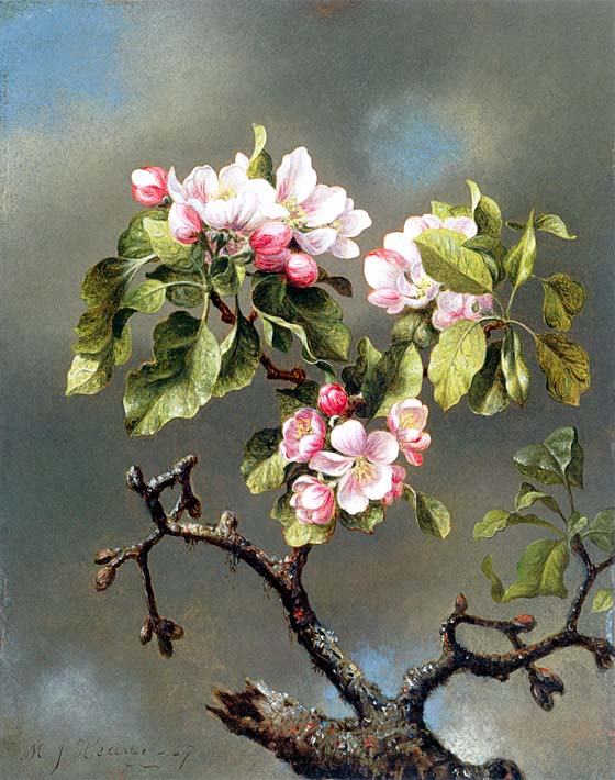 Martin Johnson Heade Branch of Apple Blossoms Against a Cloudy Sky stretched canvas art print