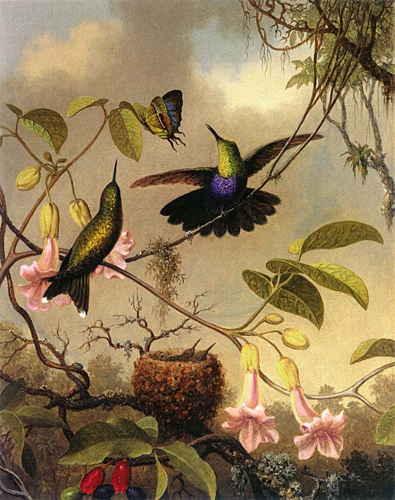 Martin Johnson Heade Fork Tailed Woodnymph stretched canvas art print