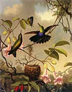 Martin Johnson Heade Fork Tailed Woodnymph