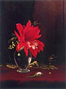 Martin Johnson Heade Red Flower in a Vase